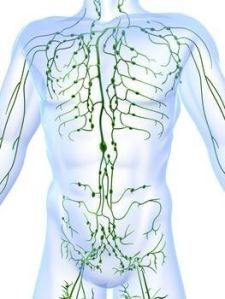 lymph system